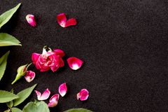 Pink rose petals. On black  background royalty free stock image