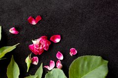 Pink rose petals. On black  background royalty free stock images