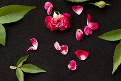 Pink rose petals. On black  background stock photos