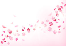 Pink rose petals is flying in the air with flares Stock Images