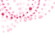 Pink rose petals is flying in the air with flares vector card Stock Photo