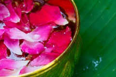 Pink rose petals in golden bowl with green leaf background Royalty Free Stock Image
