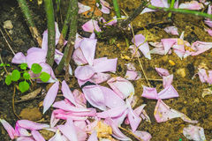 Pink Rose Petals on the Ground Stock Photo