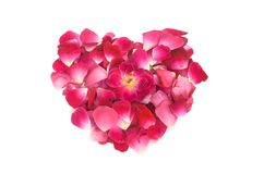 Pink rose petals heart shape formation Royalty Free Stock Images