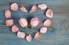 Pink rose petals imaging heart shape with two flower heads inside on blue wooden board Royalty Free Stock Images