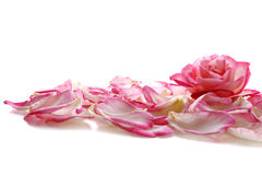 Pink rose petals. Royalty Free Stock Photo