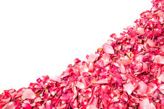 Pink rose petals over white background Stock Images