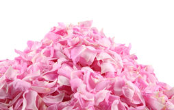 Pink rose petals pile. On white stock photography