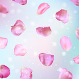 Pink rose petals. Realistic vector illustration. Pink rose petals on light blue background. Realistic vector illustration Stock Photos