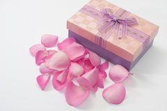 Pink rose petals scattered around the box with bow Royalty Free Stock Photography