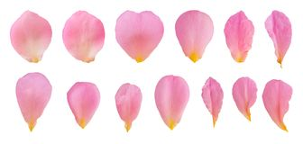 Free Pink Rose Petals Set Collection Isolated On White Royalty Free Stock Images - 146178559