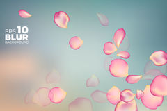 Pink rose petals in soft color. blur style vector background Stock Images
