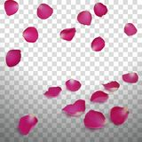 Pink Rose Petals. On a transparent background Royalty Free Stock Photos