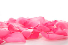 Pink rose petals on white. Pink rose petals isolated on white background stock images