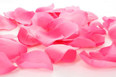 Pink rose petals on white Royalty Free Stock Photo