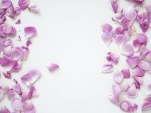 Pink rose petals on white background. Copy space. top view. flat lay royalty free stock photos