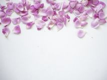 Pink rose petals on white background. Copy space. top view. flat lay stock photo