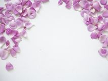Pink rose petals on white background. Copy space. top view. flat lay royalty free stock image