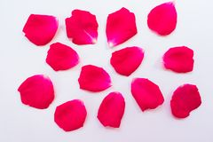 Pink rose petals on a white background royalty free stock photos