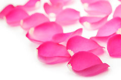 Pink rose petals  on white Stock Photography