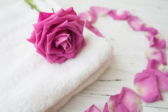 Pink rose and petals on white towel. For spa and beauty royalty free stock image