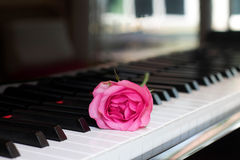 Pink rose on a piano key Royalty Free Stock Photo