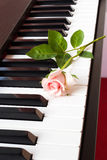 Pink rose on piano. Royalty Free Stock Photos