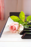 Pink rose on piano. Royalty Free Stock Photography
