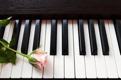 Pink rose on piano keyboard. Stock Image