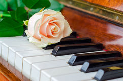 Pink rose on piano Royalty Free Stock Image