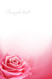 Pink rose poctcard Stock Photo