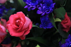 Pink Rose and Purple Flowers Stock Image