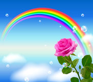 Pink rose and rainbow Stock Photos
