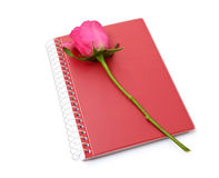 Pink rose and red notebook on white background Royalty Free Stock Image
