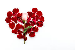 Pink rose and red rose petals forming heart shape Stock Photos