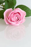 Pink rose reflecting in white surface Stock Photo