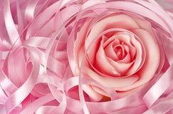 Pink rose and ribbon royalty free stock photos