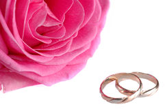 Pink rose with rings Royalty Free Stock Image