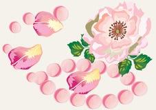 Pink rose with rose-petals Royalty Free Stock Photos