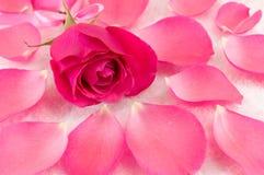 Pink rose on rose petals and bath salt Stock Photos