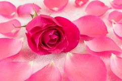 Pink rose on rose petals and bath salt stock photos