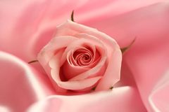 Pink Rose on Satin. A detail of a pink rose on pink satin fabric Stock Images