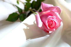 Pink Rose On Satin Stock Photo