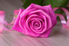 Pink rose with serpentine Royalty Free Stock Photos
