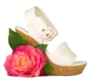 Pink rose and shoe isolated Stock Images