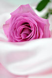 Pink Rose on Silk Stock Photography