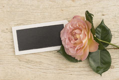 Pink rose with small slate Stock Image