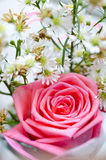 Pink rose with small white flower Royalty Free Stock Photo