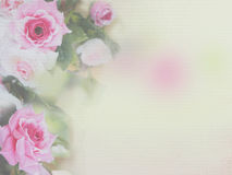 Pink rose soft style. On watercolor paper textured background Royalty Free Stock Photo