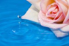 Pink rose and splash. Very close Royalty Free Stock Image